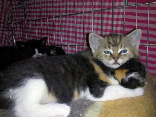 Koťata od Roziny