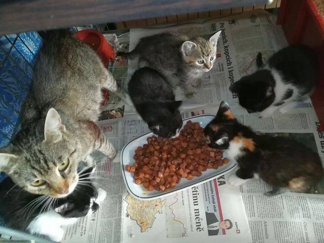 Rozina a její děti u večeře